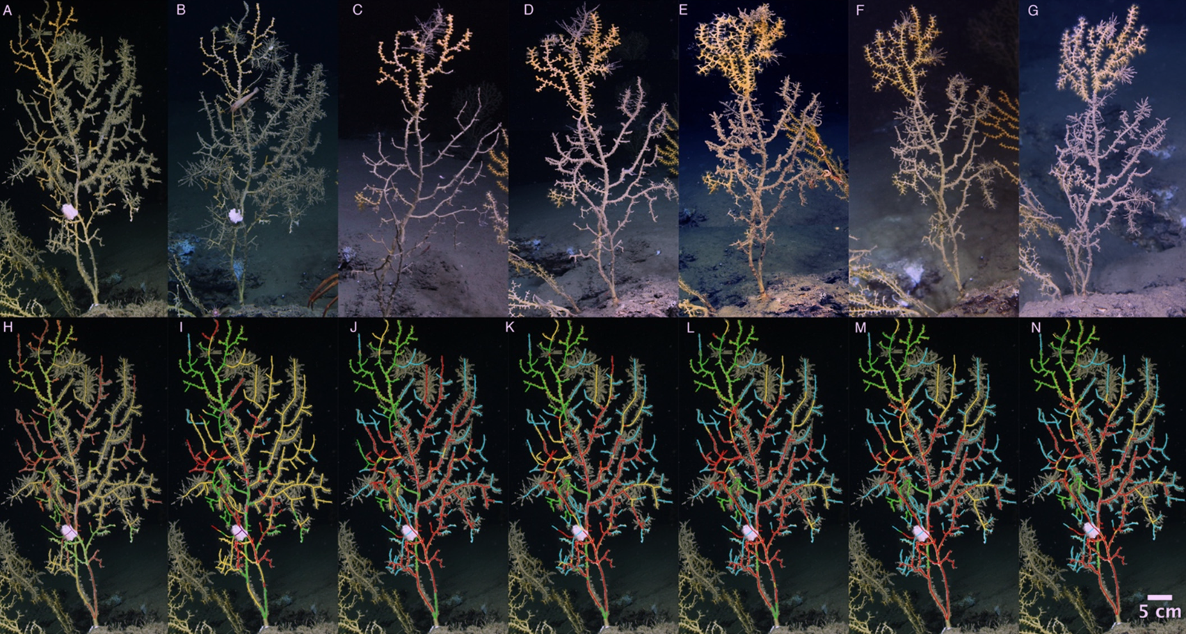 New study underscores need for long-term monitoring of deep-sea coral communities