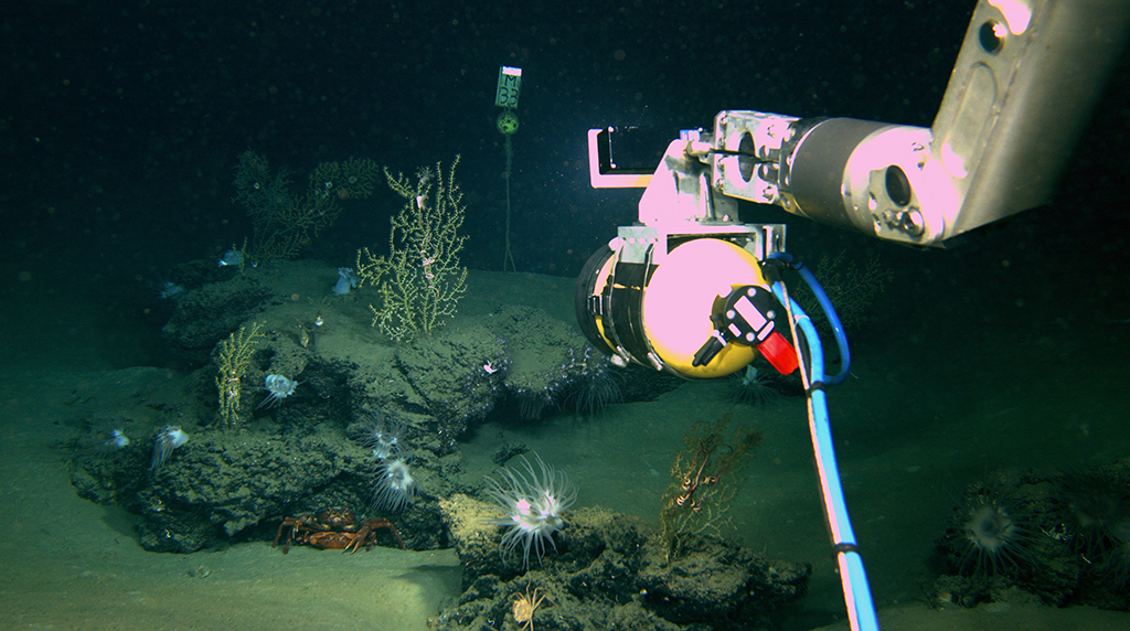 Projecting the recovery of deep sea corals after the Deepwater Horizon spill