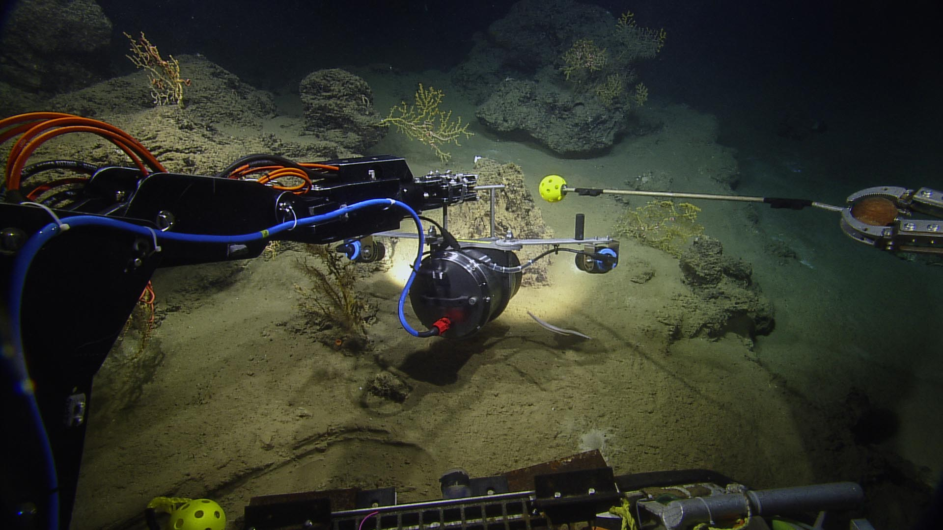 <div style='color:#000000;'><br /><br /><h2>ROV Hercules imaging some deep sea corals.</h2>Photo courtesy of Ocean Exploration Trust and ECOGIG</div>