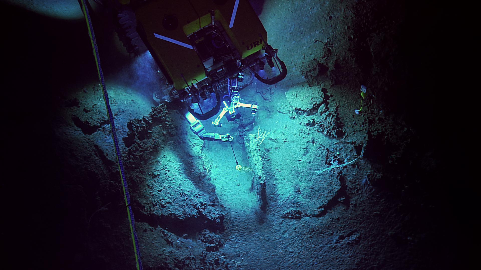 <div style='color:#000000;'><br /><br /><h2>ROV Hercules measuring deep sea corals using the WhAM (wiffle assisted measurement) device.</h2>Photo courtesy of Ocean Exploration Trust and ECOGIG</div>